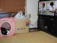 ハウスからテレビを見る2013.8.jpg