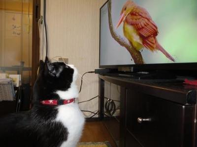 鳥とにらめっこ.jpg